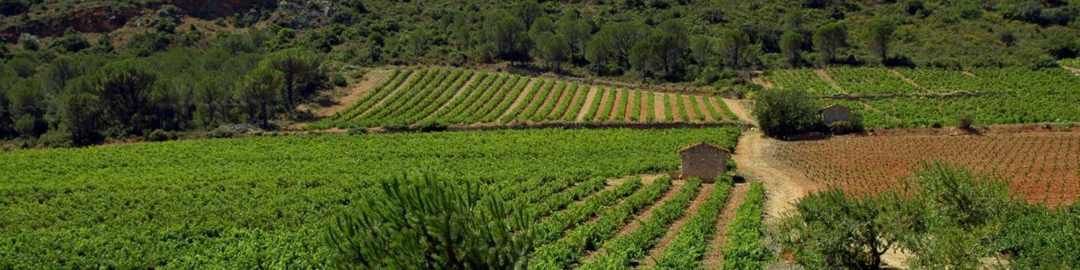 Landscape Roussillon