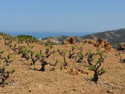 Roussillon Wines