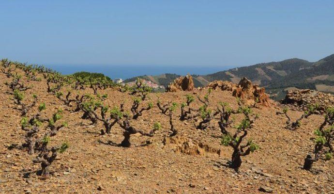 Roussillon Wines